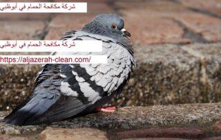شركة مكافحة الحمام في أبوظبي