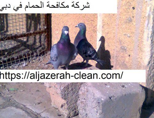 شركة مكافحة الحمام في دبي |0588405766| طارد حمام